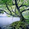 àrvore viçosa plantada junto de um rio